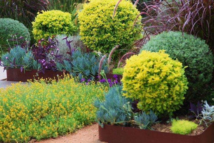 Marrickville The constant gardeners | Brendan Moar. Native planting