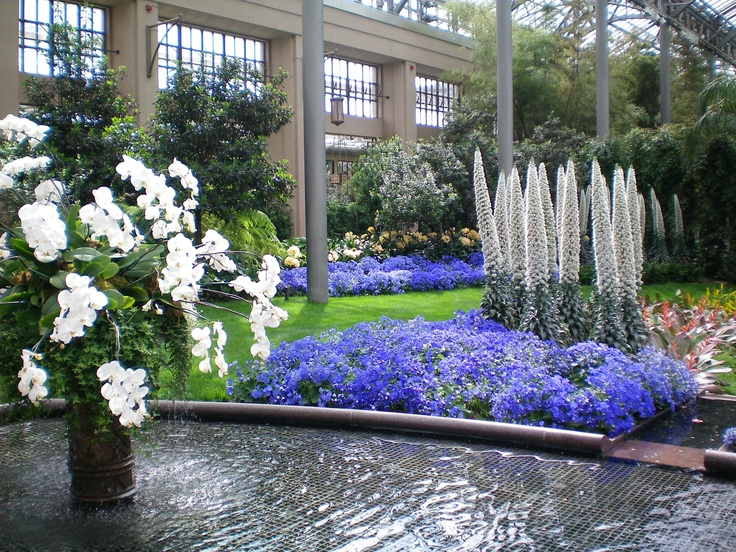 Longwood Gardens Orchid Show.