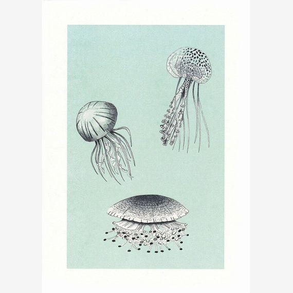 dibujo medusa, print medusas, dibujo animal, dibujo animal marino, dibujo medusas vintage, dibujo lápiz y tinta, animal del mar, dibujo azul