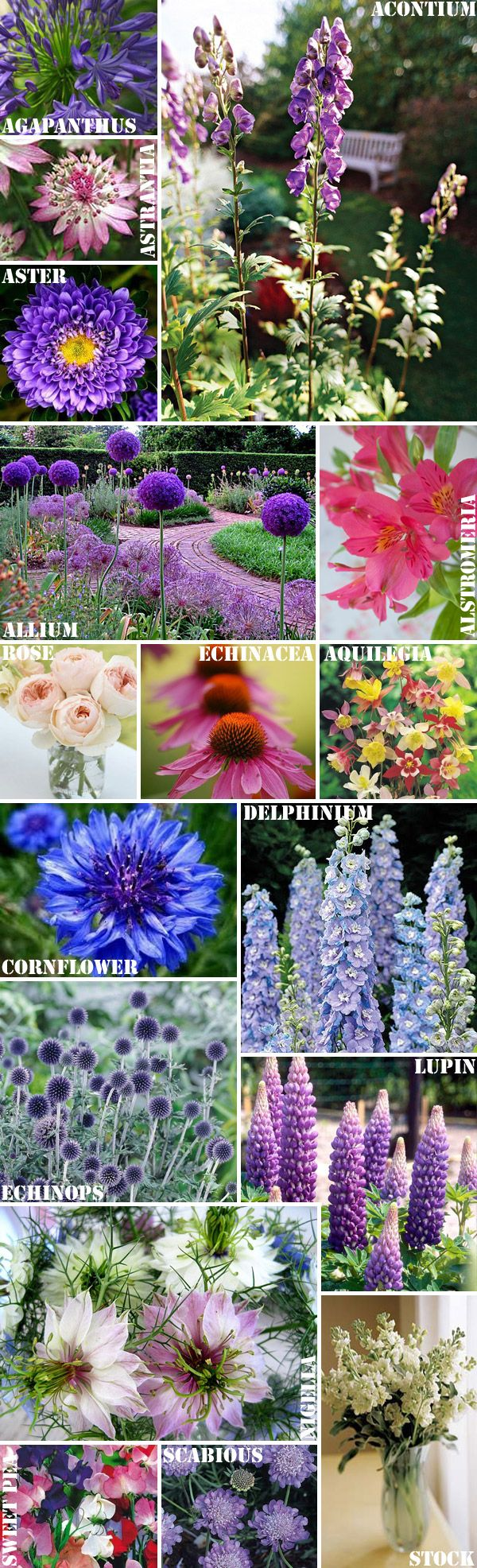 A Midsummer flowers guide by @Lilly Nolta The Florist on @florencefinds - Perfect for weddings