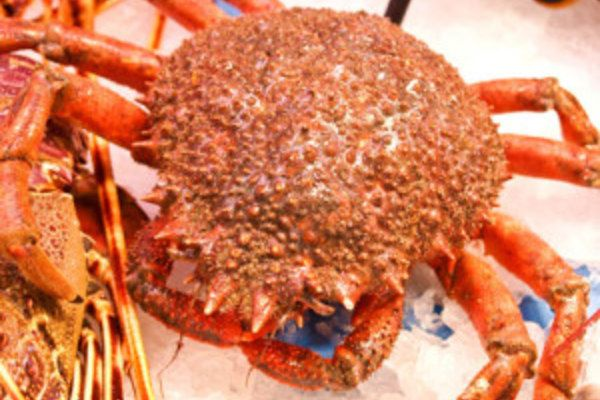Seespinne, Meerspinne essen: Köstliches Seafood!