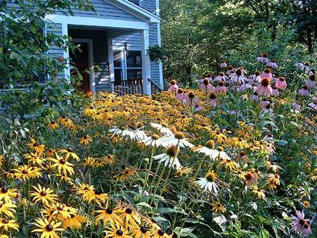 Wildflower yard designs gardens landscape design for Easy to maintain garden