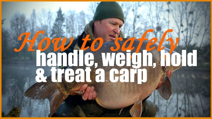 Properly caring for a carp on the bank is one of the most important aspects of carp fishing. We need to ensure the carp we catch are returned back to the water in excellent condition and suffer the least amount of stress or damage. In this video I show you exactly how to handle a carp out of the water, how to weigh it accurately and hold it safely for the camera. The video also covers treatment of wounds and how to return a carp safely to its home.