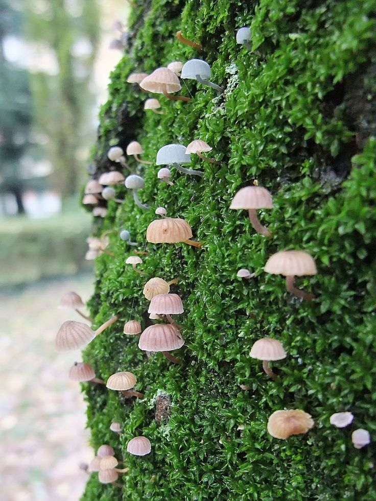 mushrooms on moss-I would say the fairies would love to jump on these...a game of skipping mushrooms