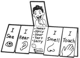 5 senses book.