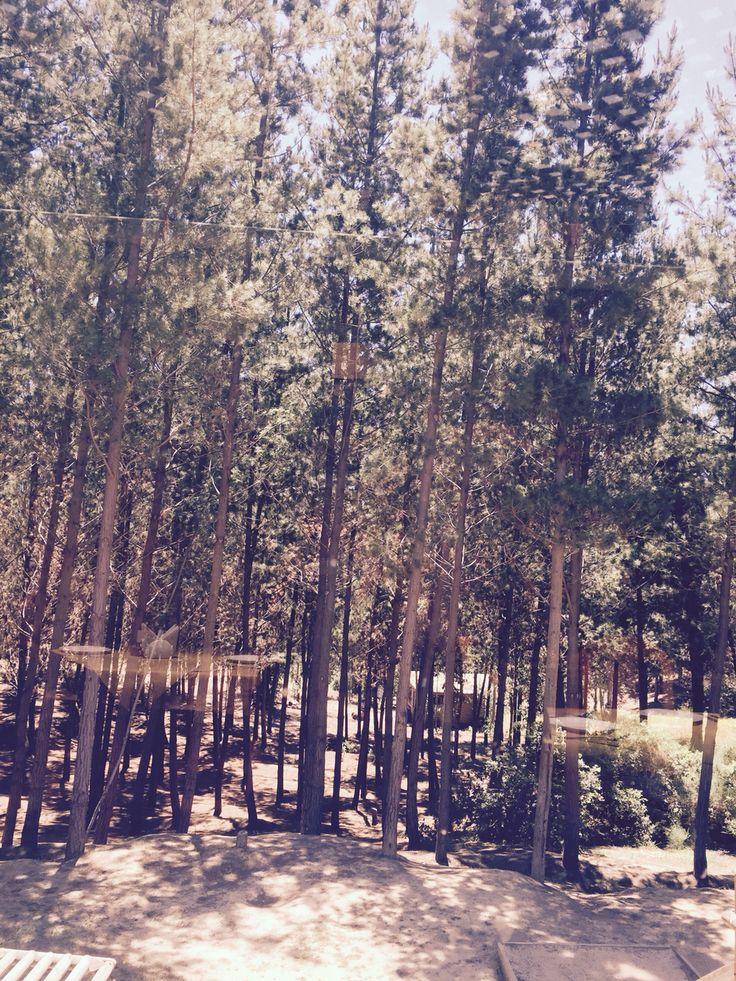 Bosque de La Estancia en El Totoral, El Quisco.