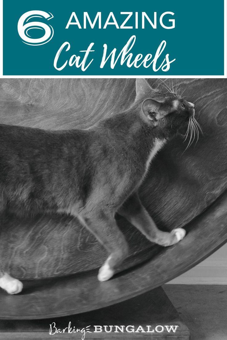 best dry cat food for indoor cats 2021