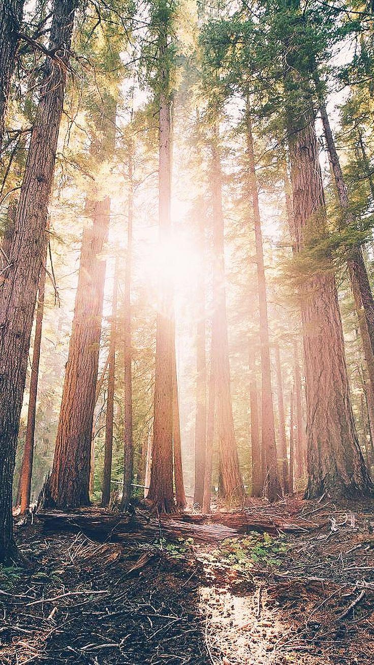 cool wallpaper-trees-mountain-iphone6-plus-wallpaper