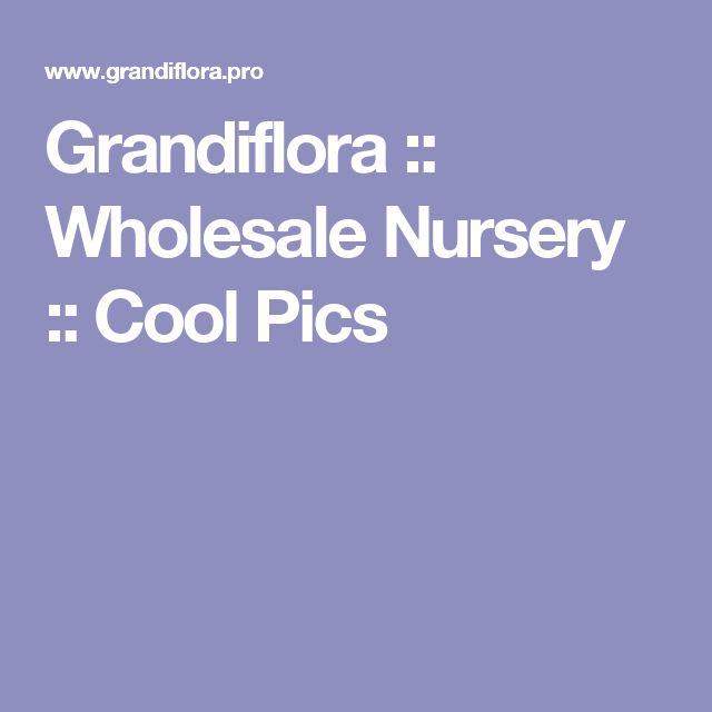 Grandiflora :: Wholesale Nursery :: Cool Pics