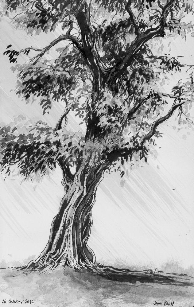 Day 26 - Tree in Ink #inktober #inktober2016