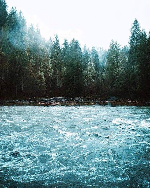 Where Forest Meets The Water Nature Photography Nature Scenes Beautiful Nature