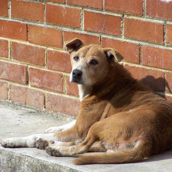 #ImagenDelDia Hoy es el Día Internacional del Perro Callejero.