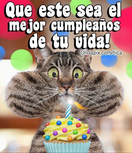 gatos cumpleaños - Buscar con Google