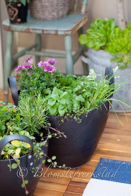 growing herbs in the balcony