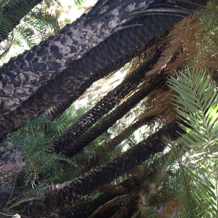 #preveli #palm_forest #Crete