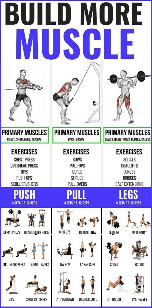 Trainingsplan push pull leg The Classic