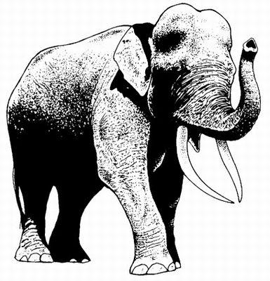 Aziatische olifant links  5 x 5?