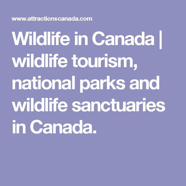 Wildlife in Canada | wildlife tourism, national parks and wildlife sanctuaries in Canada.