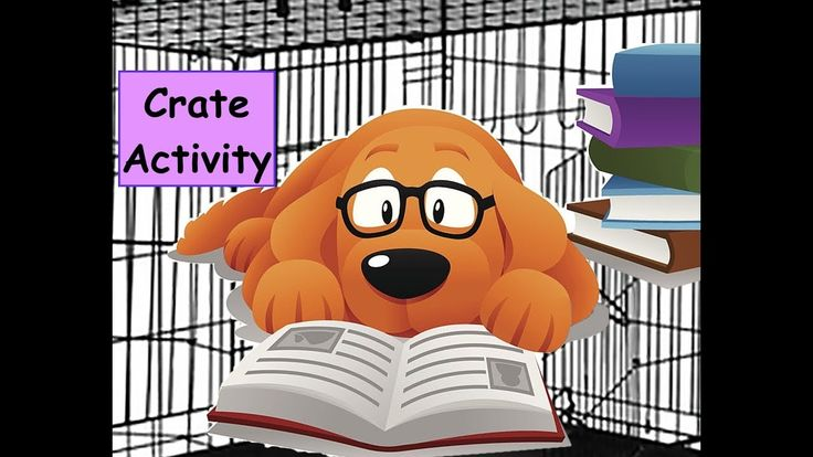 No Walks? Don't Worry! Crate Rest Activities for Dogs