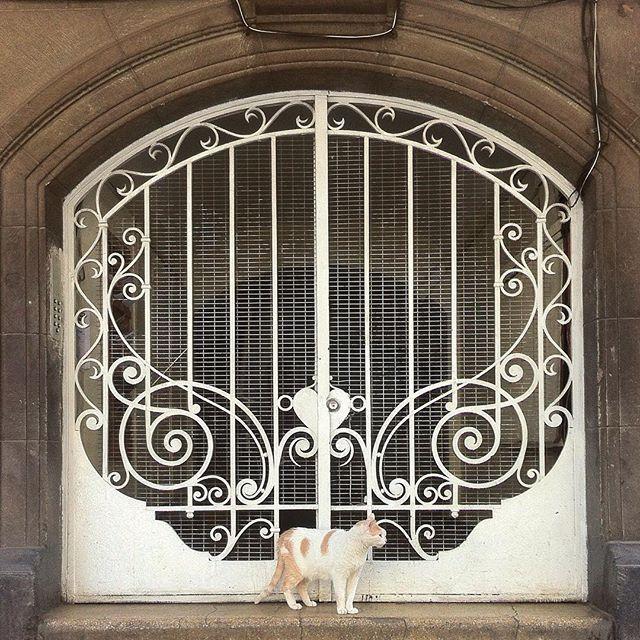 Door and cat in Santiago de Chile by @laciudadalinsta   Si sí hagamos algo…