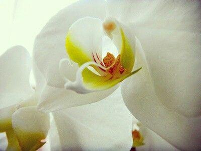 Orquídeas colombianas..luz para nuestros espacios