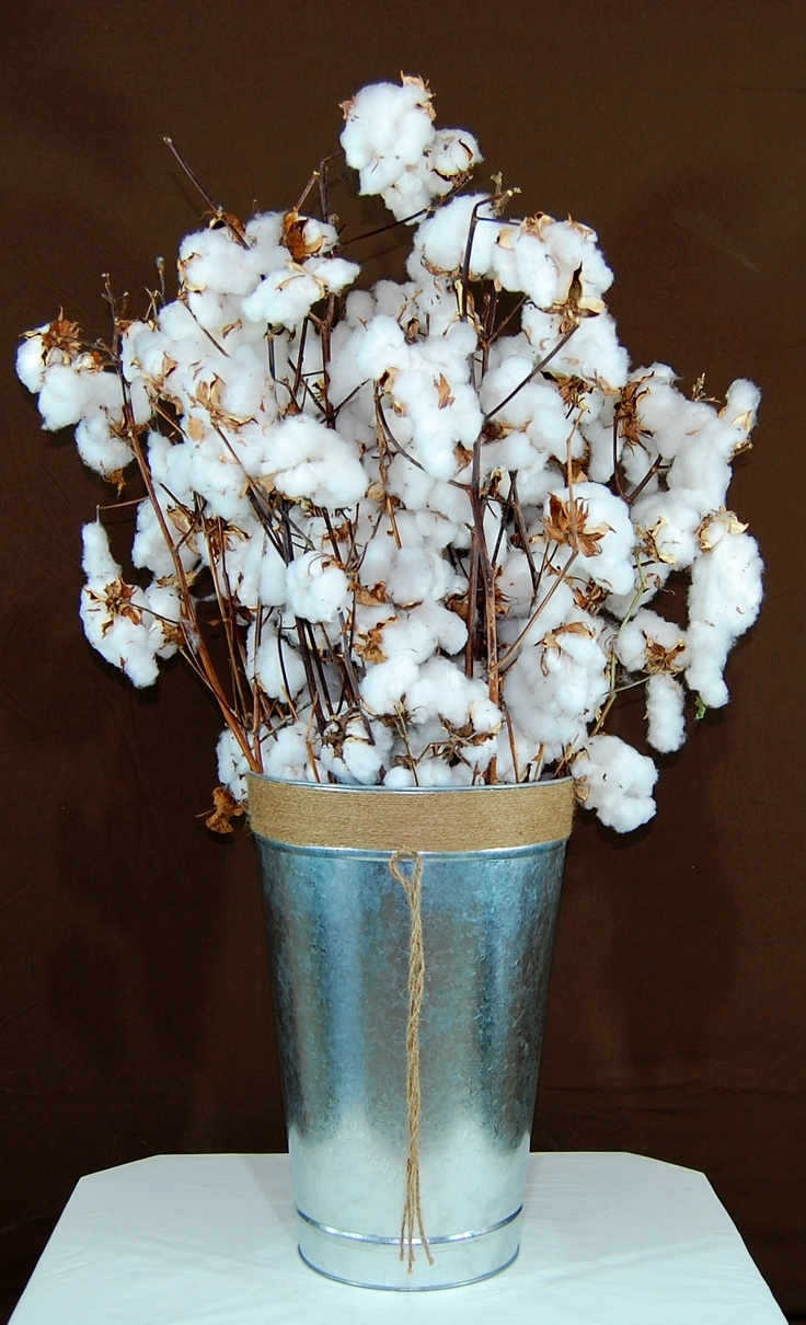 www.floralcotton.com    Raw Cotton Boll  Floral Cotton