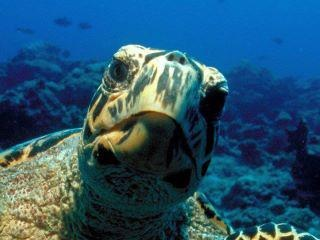 Hi there!: Fav Animal, Aquarium,  Loggerhead Turtle, Underwater Photography, Loggerhead Turtles, What Cha Doin, Whatcha Doin, Sea Turtles, Animal Birds
