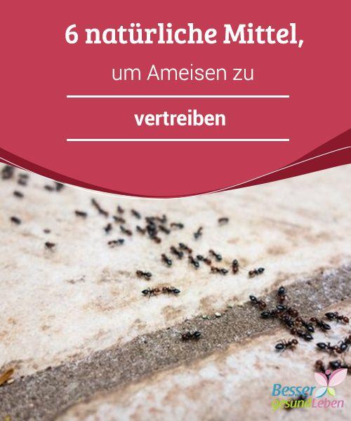Die besten 25+ Ameisen vertreiben Ideen auf Pinterest Küchen - was hilft gegen ameisen in der k che