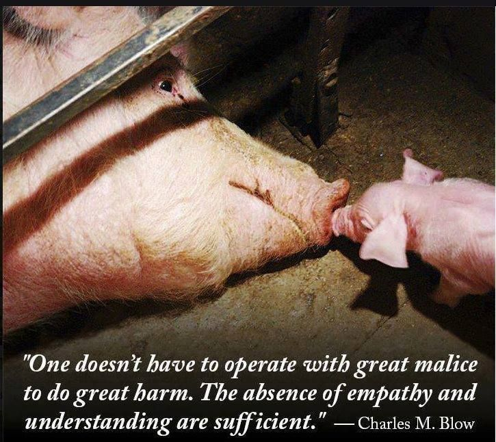 We're all born with compassion, love & #kindness. It's the way we're raised that destroys it.  #Animals