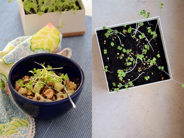 Salada de lentilhas e raiz de aipo com microvegetais Life in a bag by Gourmets Amadores
