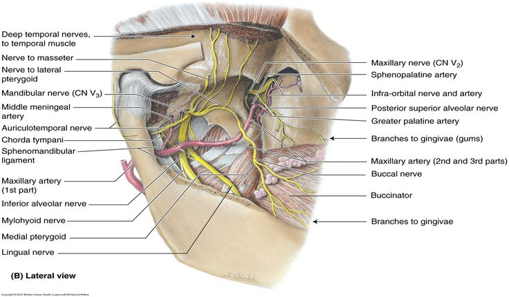16 Best Anatamepath Images On Pinterest Anatomy Anatomy Reference