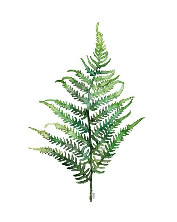This is a fine art giclée print made from my original watercolor painting Fern Study 2.  PRINT DESCRIPTION - Printed on Epson Stylus Inkjet