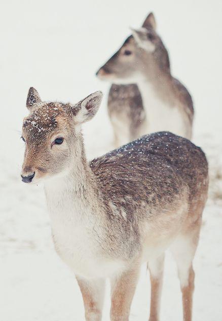 softly fallen snow florahenri.com