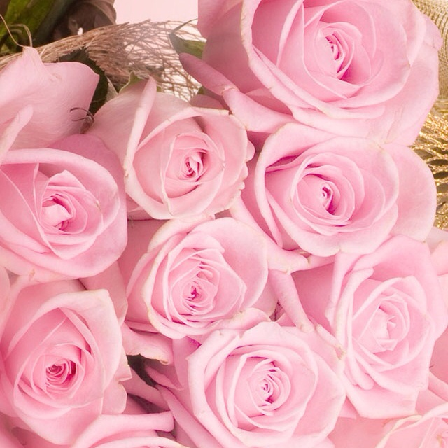 Baby pink roses. | Simplicity is beautiful | Pinterest