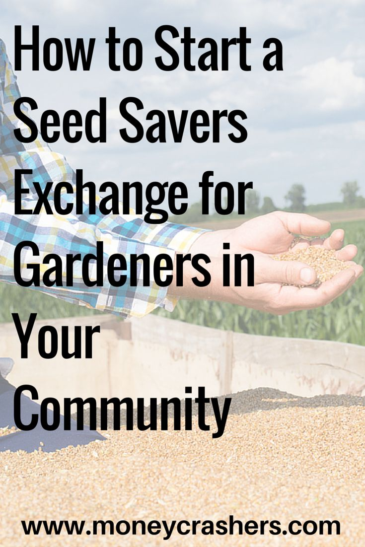 Seed exchanges are a part of the ever-expanding sharing economy, a network of people who save money by sharing products and services instead of buying and selling them. In a seed exchange, gardeners get together to swap their unused seeds for others they can use. Gardeners can contribute seeds they've harvested from their own plants, seeds from crops that they no longer care to grow, or leftover seeds they don't have time to use.