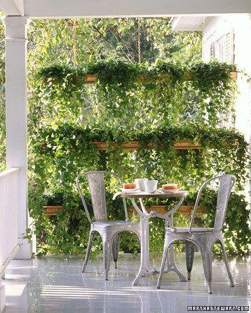 Container Garden Ideas--Ivy screen