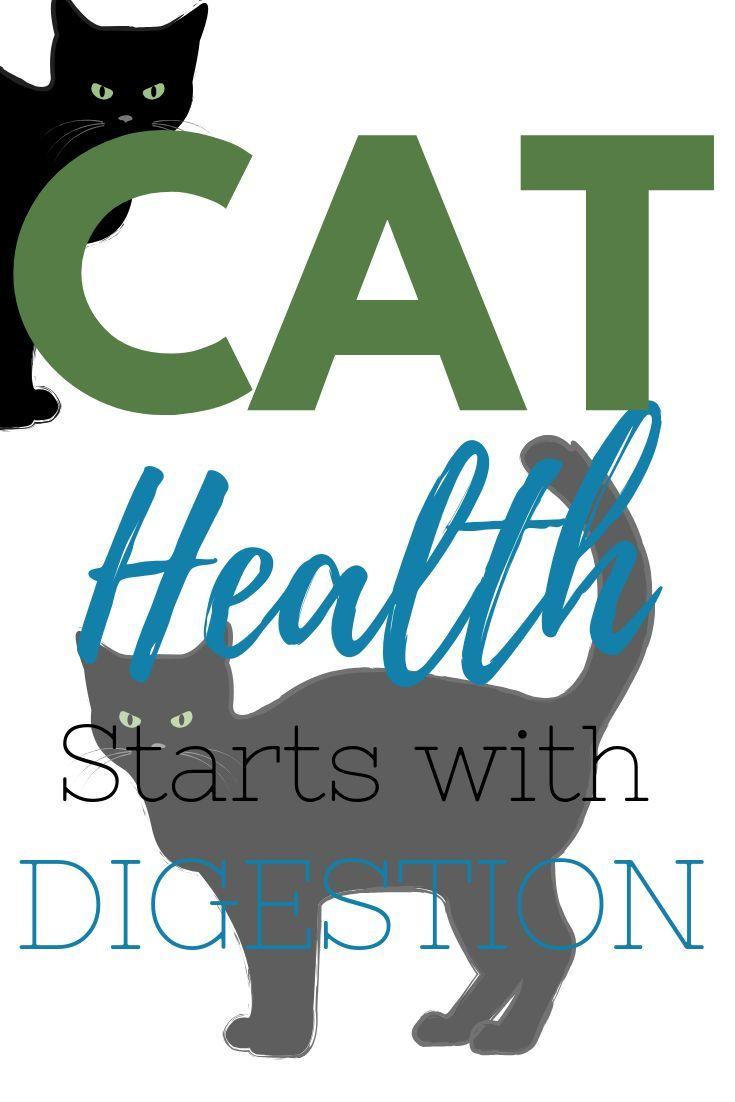 Probiotics For Cats Probiotics For Cats Probiotics Cat Diet