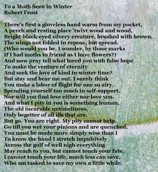 robert frost and poetry essay For me the beauty of robert frost's poetry lies in its deceiving simplicity it is this  fact that i believe explains his enduring popularity across the globe – and.