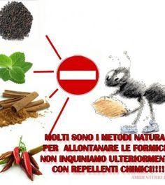 Consigli naturali per allontanare le formiche da casa e giardino   <3