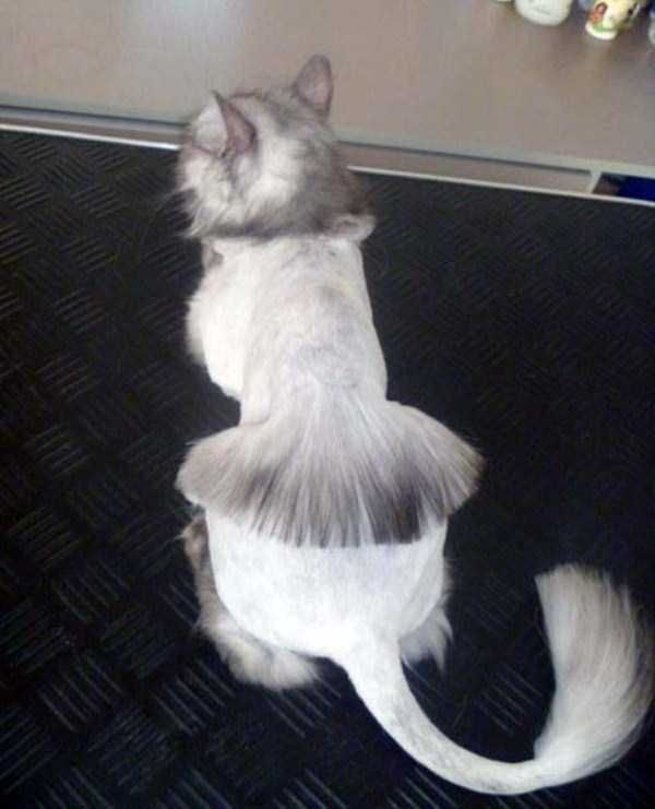 47 Best Cat Grooming Images On Pinterest Cat Grooming Cats And