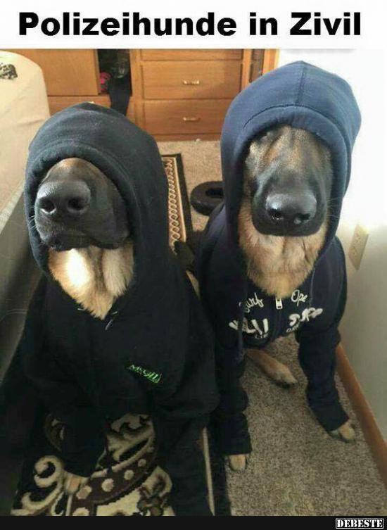 Polizeihunde in Zivil | Lustige Bilder, Sprüche, Witze, echt lustig