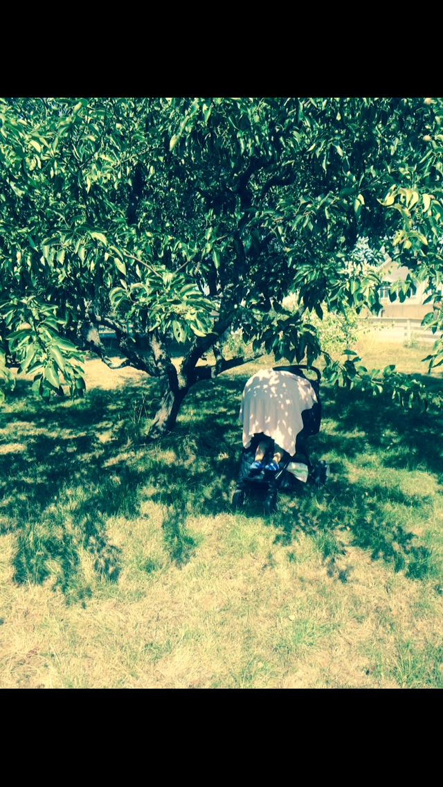 Liten tupplur i äppellundens skugga.