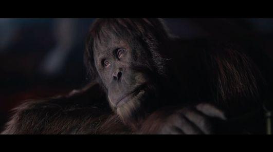 ape rendering
