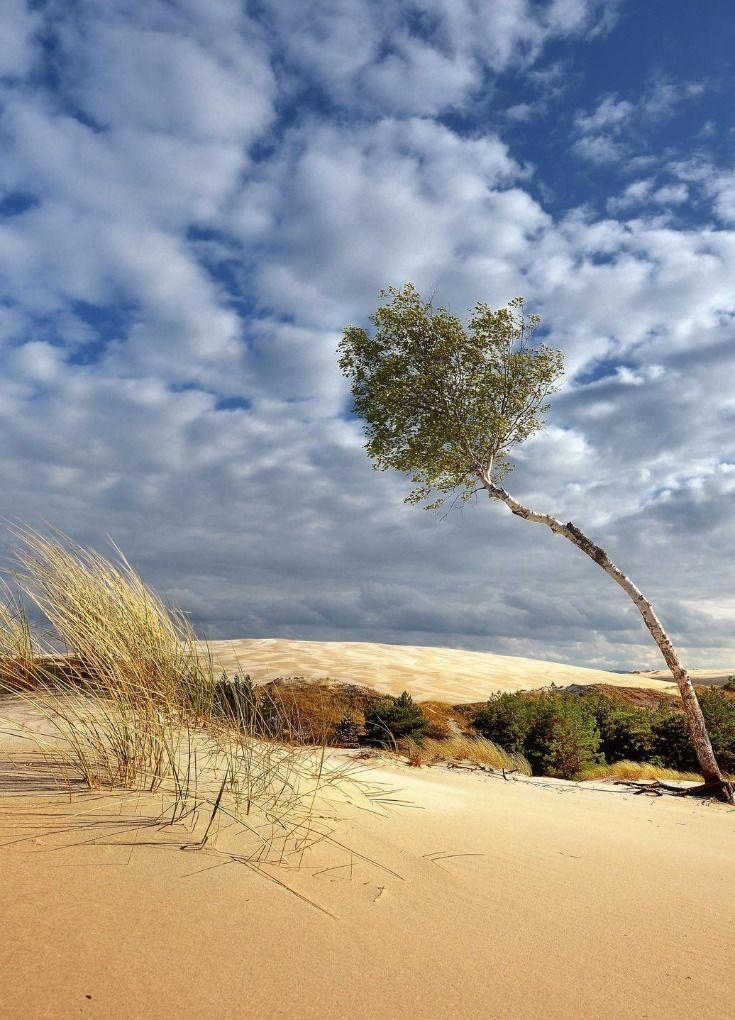 """Polish Desert"", Słowiński Park Narodowy, Leba, Poland"
