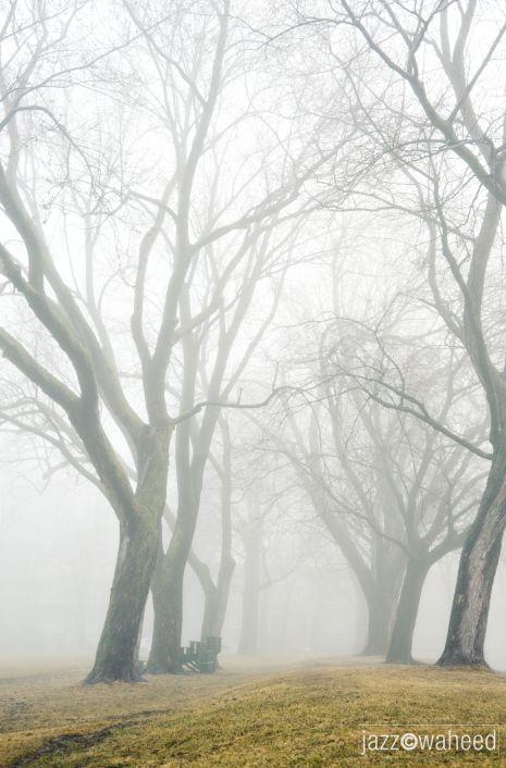 Montreal fog #2