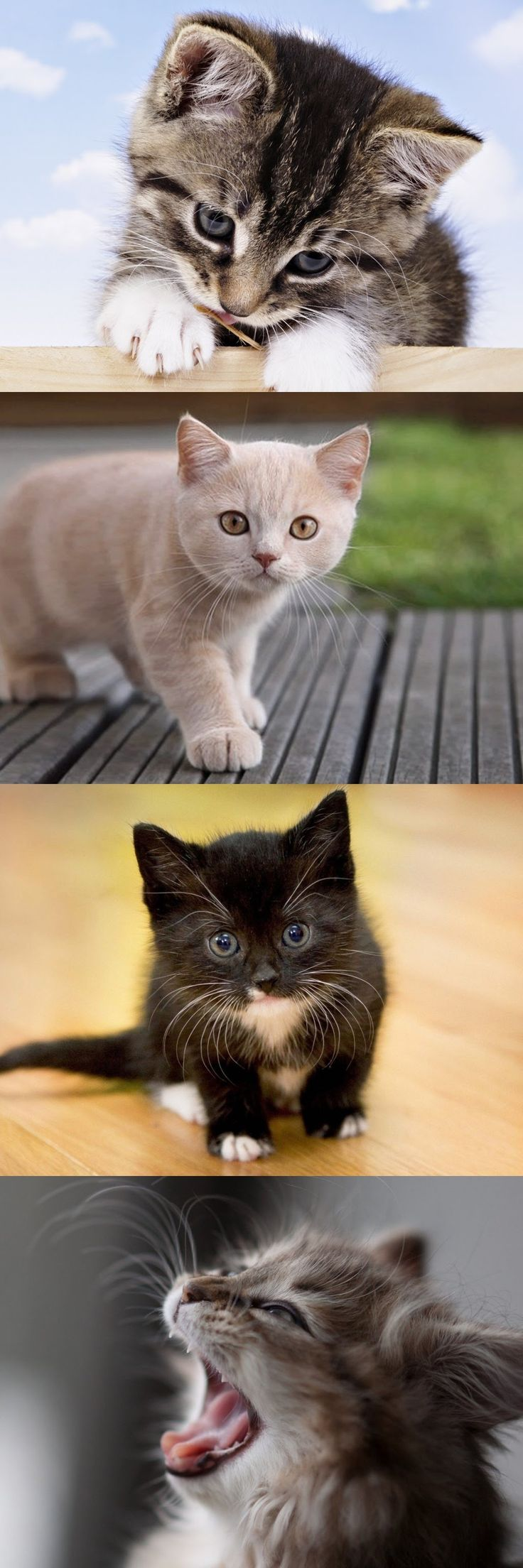 5515 Best Images About More Kittens On Pinterest