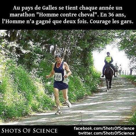 En savoir plus (en anglais) : https://en.wikipedia.org/wiki/Man_versus_Horse_Marathon #cheval #marathon Au pays de Galles se tient chaque année un marathon Homme contre cheval. En 36 ans lHomme na gagné que deux fois. Courage les gars.