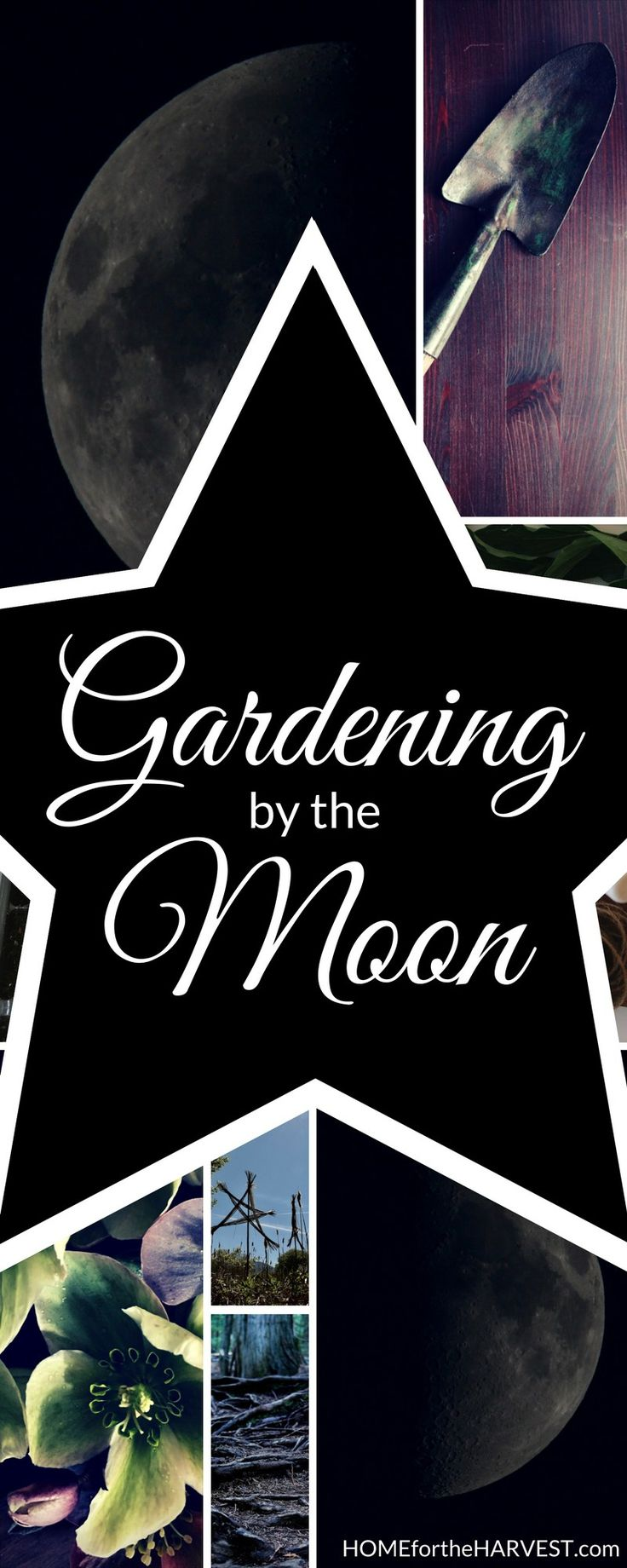 Aligning your garden planting schedule with the lunar cycles - includes basic, intermediate, and advanced methods of gardening by the moon | Home for the Harvest