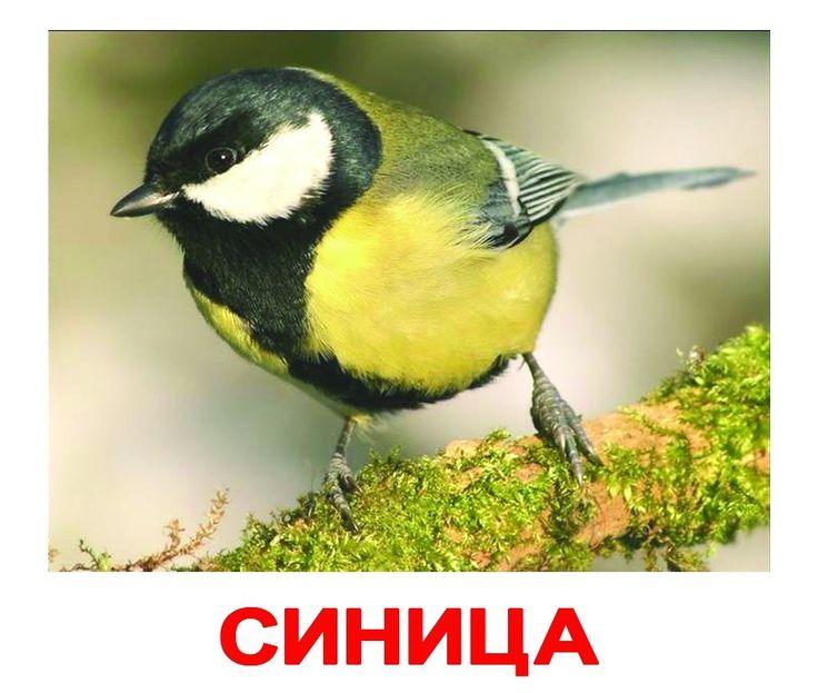 """Комплект карточек """"Птицы"""" размером 16,5*19,5 см."""