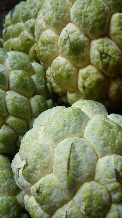 Srikaya (ou serikaya) : Sugar-apple, a tropical fruit from the Annona genus Kaya (jam), a food spread from Southeast Asia.